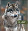 Le retour du loup - Informations importantes